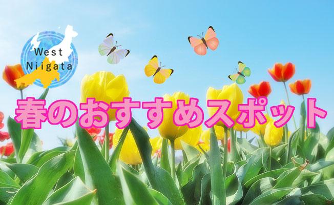 West Niigata 春のおすすめスポット!楽しいイベント!