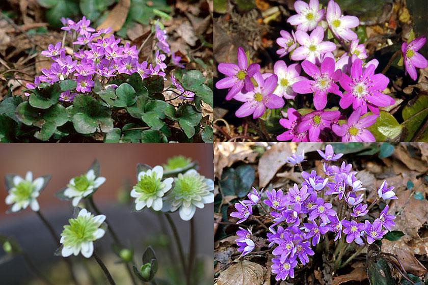 雪国植物園 里山の花祭り